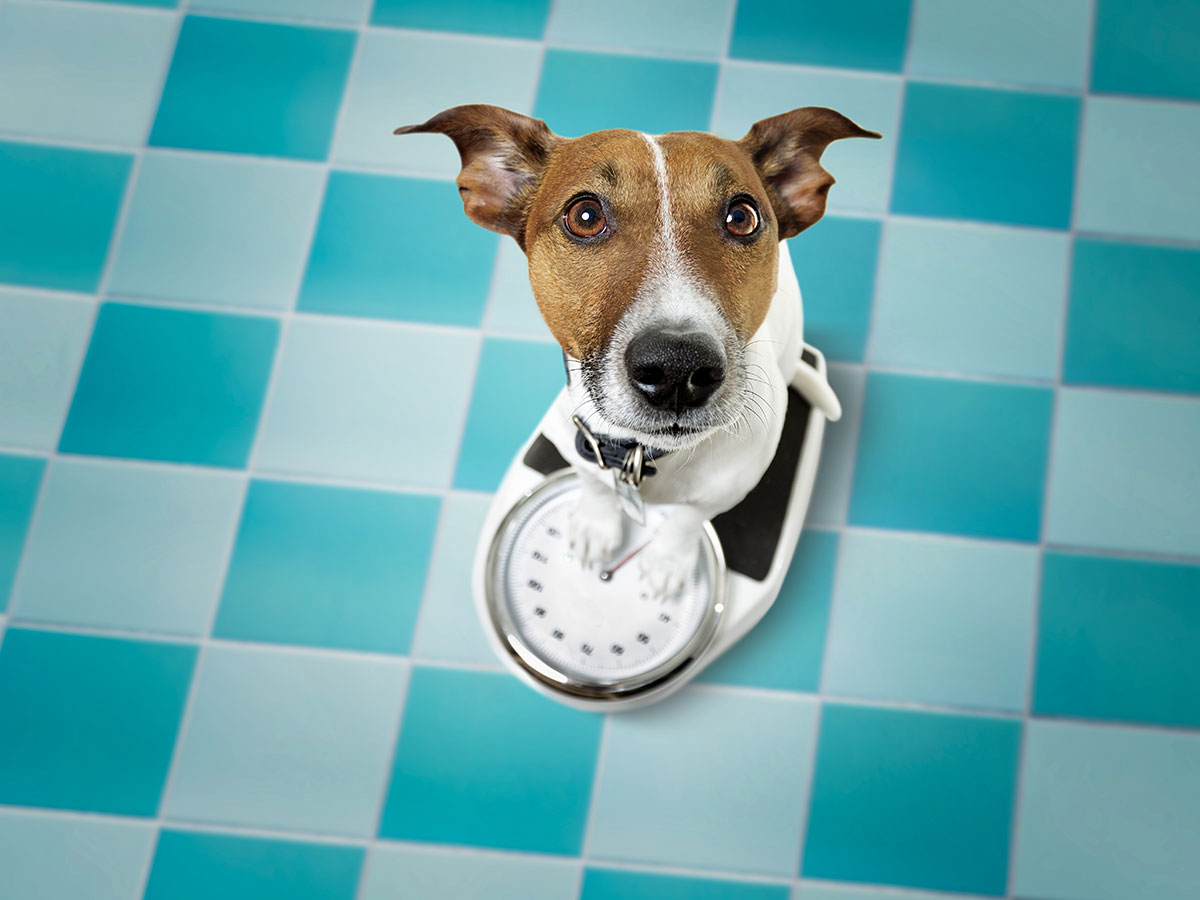 Weight Management service for Pets
